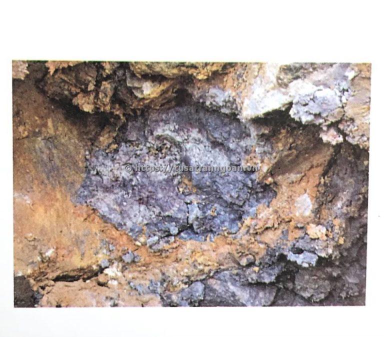 Đoàn nê mỏ Đài Tây (Sa Ngư Bì)