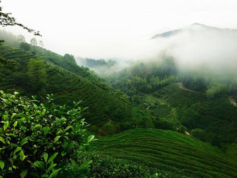 Khái quát về trà Vũ Di Sơn – phía bắc Phúc Kiến